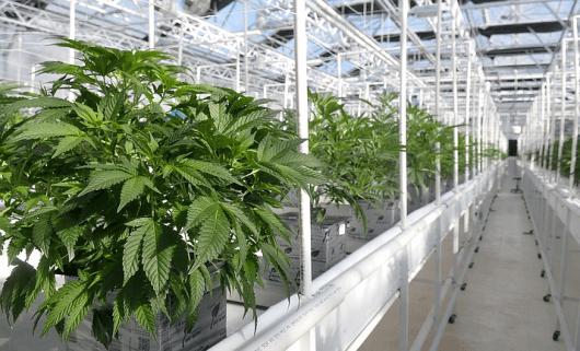 marijuana industry financing